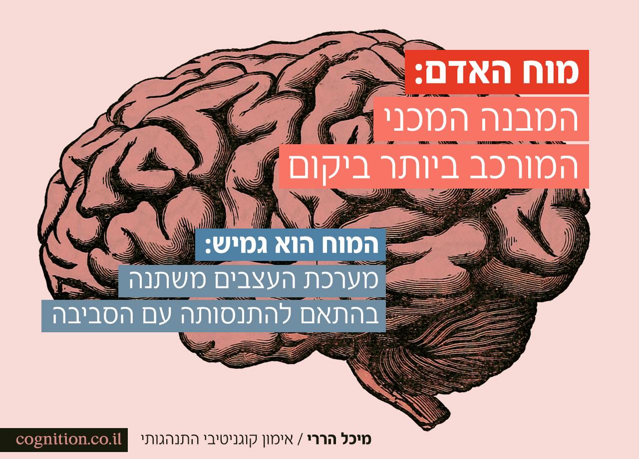 הנוירופלסטיות של המוח